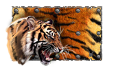 tigr_preview.png